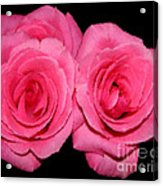 Pink Roses With Brush Stroke Effects Acrylic Print