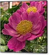 Pink Row Acrylic Print