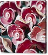 Pink Sea Shells On Cozumel Acrylic Print