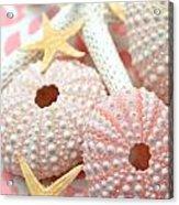 Pink Sea Urchins Acrylic Print