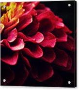 Pink Secret Acrylic Print