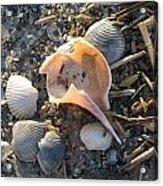 Pink Shell Bowl Acrylic Print