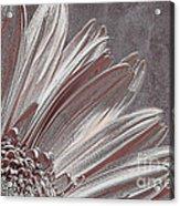 Pink Silver Acrylic Print