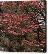 Pink Spring - Dogwood Filigree And Lace Acrylic Print by Georgia Mizuleva