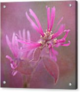 Pink Squared 2 Acrylic Print