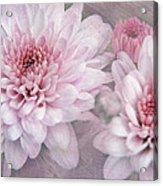 Pink Sugar Acrylic Print