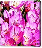 Pink Summer Blossoms Acrylic Print