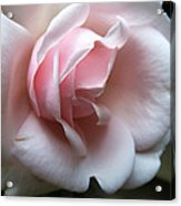 Pink Acrylic Print by Tanya Jacobson-Smith
