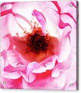 Pink Tourmaline Palm Springs Acrylic Print
