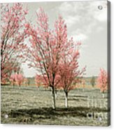 Pink Trees Acrylic Print