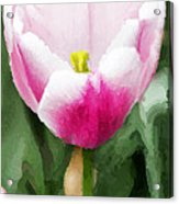 Pink Tulip - A Digital Painting Acrylic Print