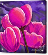 Pink Tulips On Purple Acrylic Print
