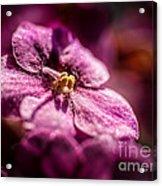 Pink Violet Glory Acrylic Print