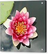 Pink Waterlily And Cloud Reflection Acrylic Print