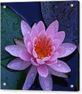 Pink Waterlily Acrylic Print
