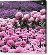 Pink Waves Acrylic Print