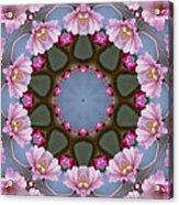 Pink Weeping Cherry Blossom Kaleidoscope Acrylic Print