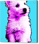 Pink Westie - West Highland Terrier Art By Sharon Cummings Acrylic Print
