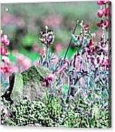 Pink Wildflowers Acrylic Print