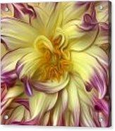 Pink Yellow Dahlia Acrylic Print