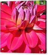 Pinked Acrylic Print