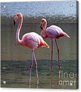 Pinkest Flamingo Acrylic Print