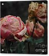 Pink Roses In The First Snow I V Acrylic Print