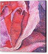 Pinkrose#5-2 Acrylic Print