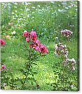 Pinks And Daisies Acrylic Print