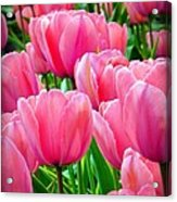 Pinks My Color Acrylic Print