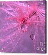 Pinky Dream Acrylic Print
