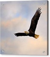 Pinson Mounds Eagle Acrylic Print