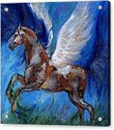 Pinto Pegasus With Blue Mane Acrylic Print