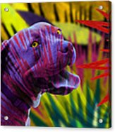 Pit Bull Acrylic Print