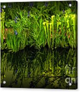 Pitcher Plant Paradise Acrylic Print by Mike Nellums