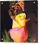 Piz535 Acrylic Print