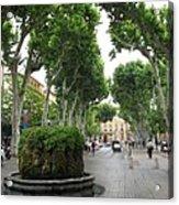 Plane Alley - Aix En Provence Acrylic Print