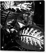 Plant 8658 Acrylic Print