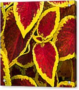 Plant Design Acrylic Print