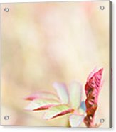 Plant Frills Acrylic Print