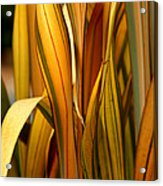 Plant In Yellow And Green Acrylic Print