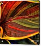 Plant Leaf Acrylic Print