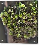 Plant Mutation Acrylic Print