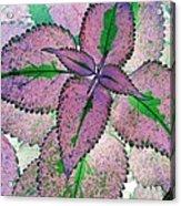Plant Pattern - Photopower 1211 Acrylic Print