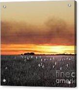 Plant Rd Lacassine Nwr Louisiana Acrylic Print
