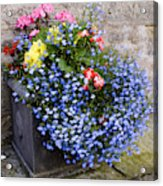 Planter With Trailing Lobelia Lobelia Yellow Begonias Begonia