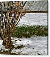 Plantgrasscomp 2009 Acrylic Print