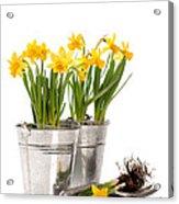 Planting Bulbs Acrylic Print