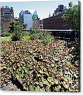 Plants And Flowers On The High Line Acrylic Print