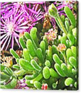 Plants Flowers Acrylic Print
